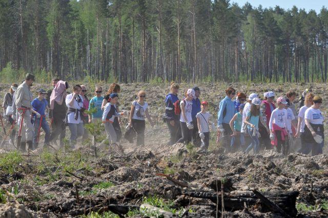 В Тюменские леса высадят более 14 млн сеянцев