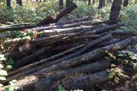 Предприниматель вырубил 900 кубометров древесины, чтобы сократить расходы на строительство дороги к лесному участку, который он арендовал.