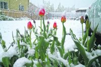 Снег в мае - не такая и редкость.