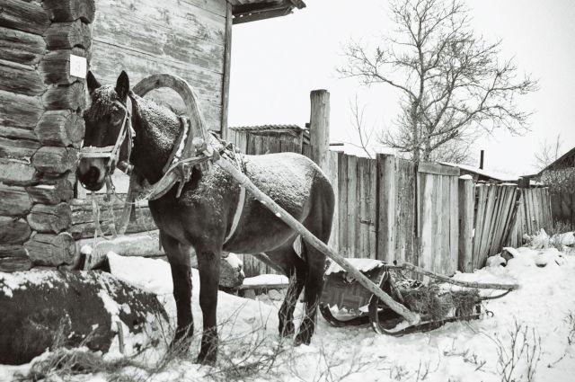 Потеря лошади приравнивалась к преступлению