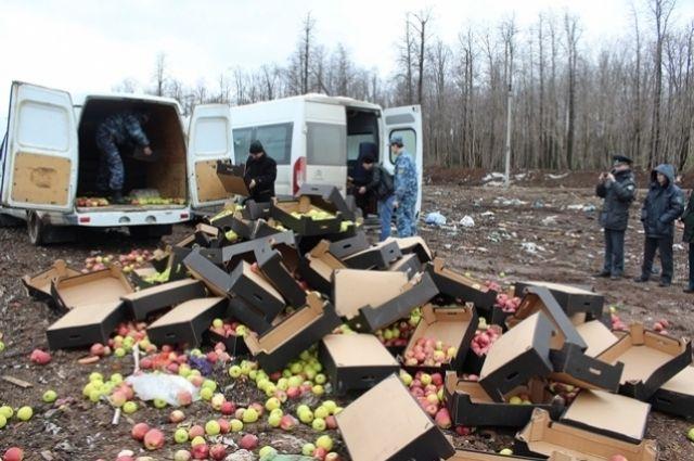 Фрукты раздавили  на Пермском полигоне твердых бытовых отходов «Софроны» бульдозером.