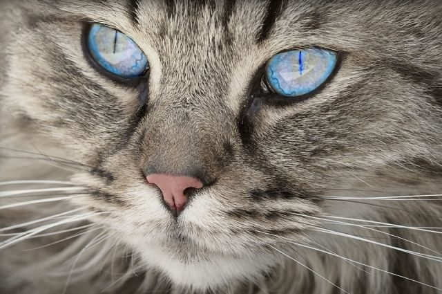 В Тюмени кот гулял во дворе и неожиданно застрял под машиной