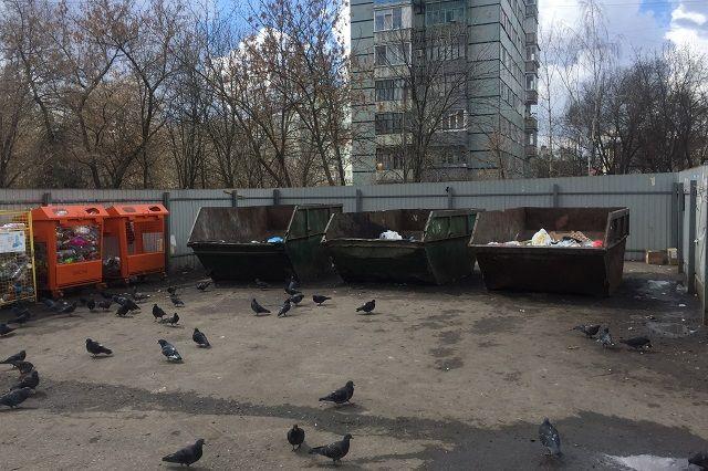 В 300 тысяч рублей обходится уборка одной свалки.