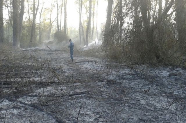 Неповторимый Самурский лес вспыхнул вМагарамкентском районе