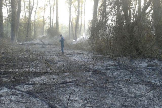 ВСамурском лесу наюге Дагестана произошел пожар
