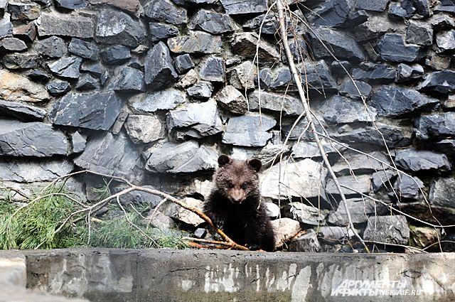 Питомцы Новосибирского зоопарка уже выводят в свет своих детенышей