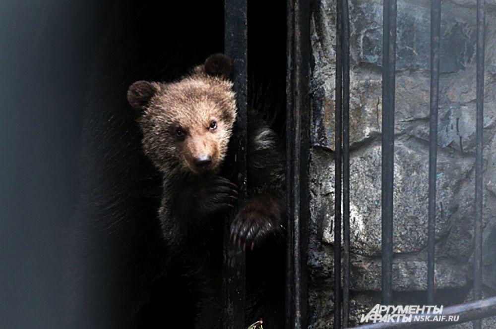 Медвежонок ждет свою маму