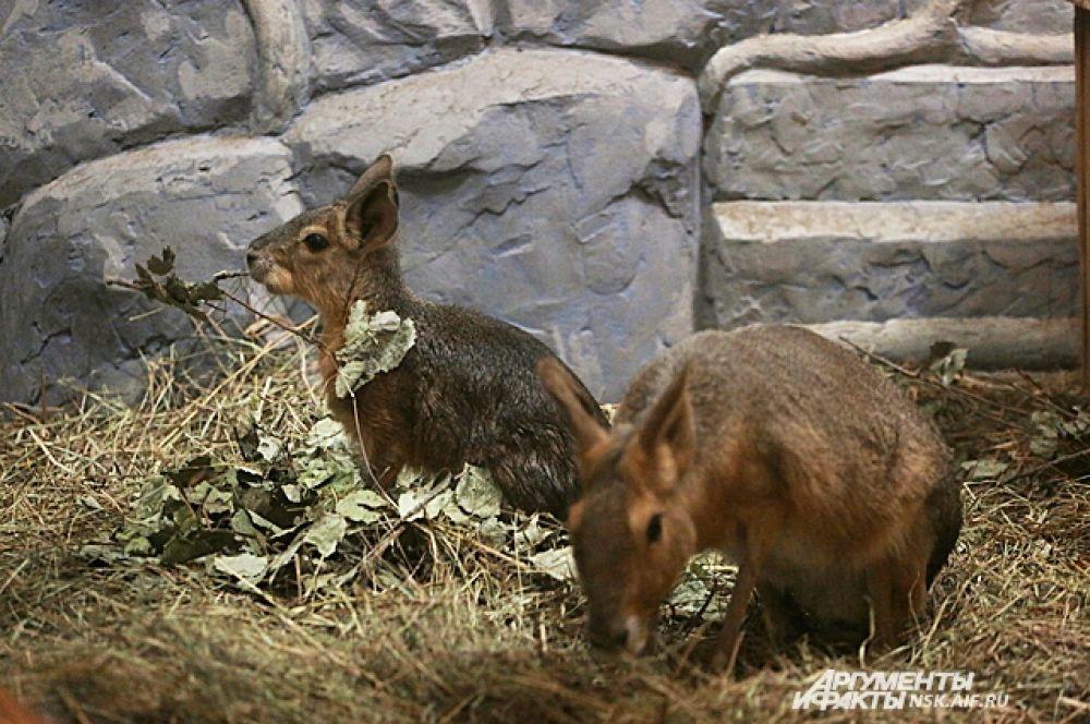 За один год в Новосибирском зоопарке рождается более двухсот детенышей разных животных