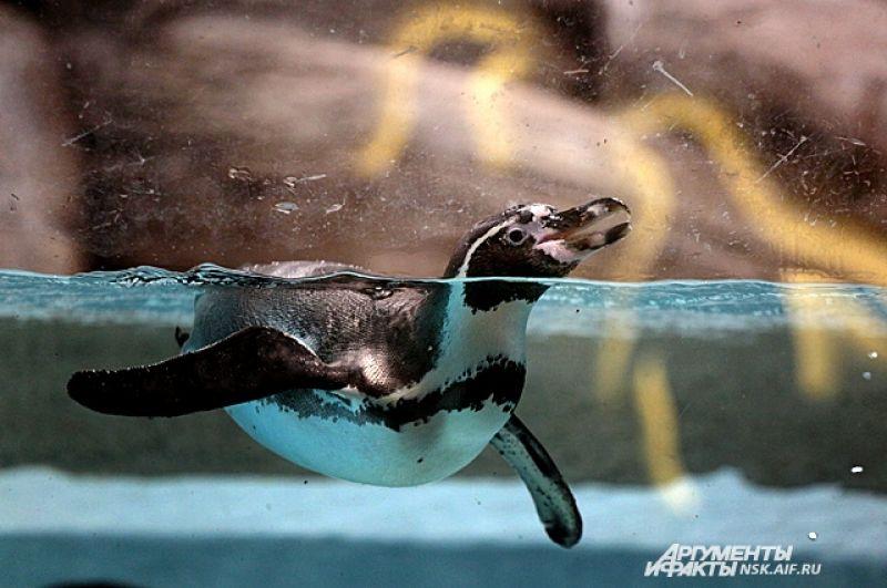 Пингвины тоже рады приходу весны