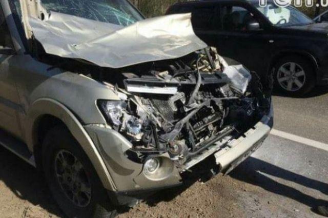Украинский боксер попал вДТП: сбил лося иразбил собственный вседорожный автомобиль