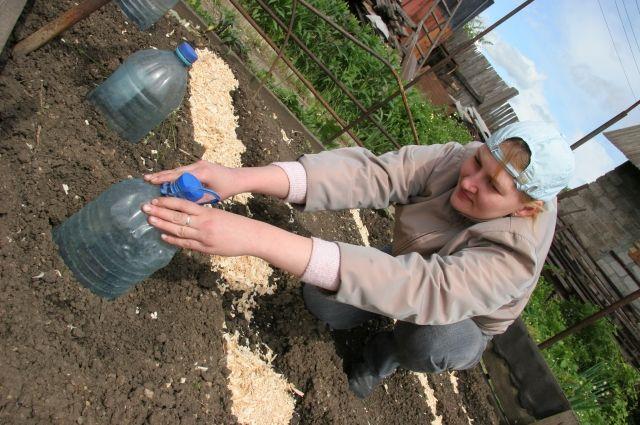 Какими бы не были морозоустойчивыми семена, при сильном минусе на почве лучше подстраховаться и накрыть грядки.