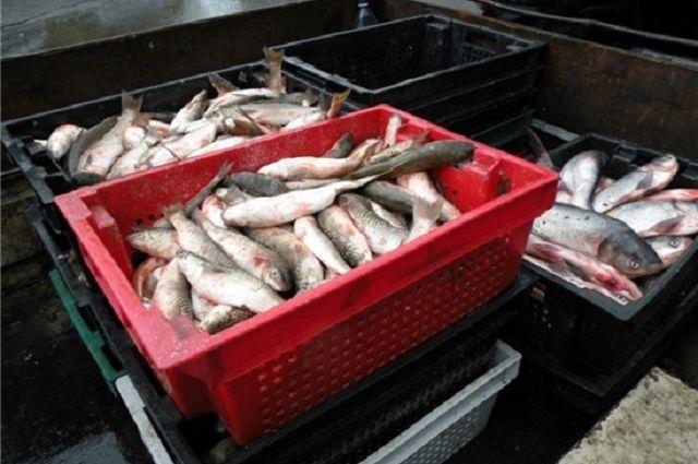 ВРостовской области уничтожили 700кг рыбы без документов