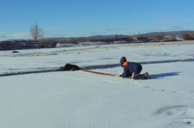 Под Северодвинском провалился вполынью каракат с 2-мя рыбаками