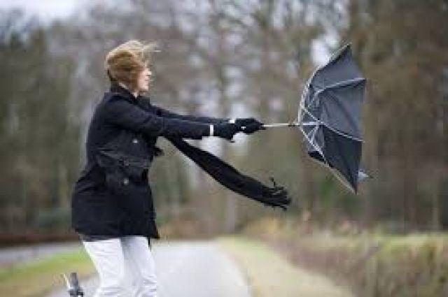 МЧС предупредило обусилении ветра вПетербурге