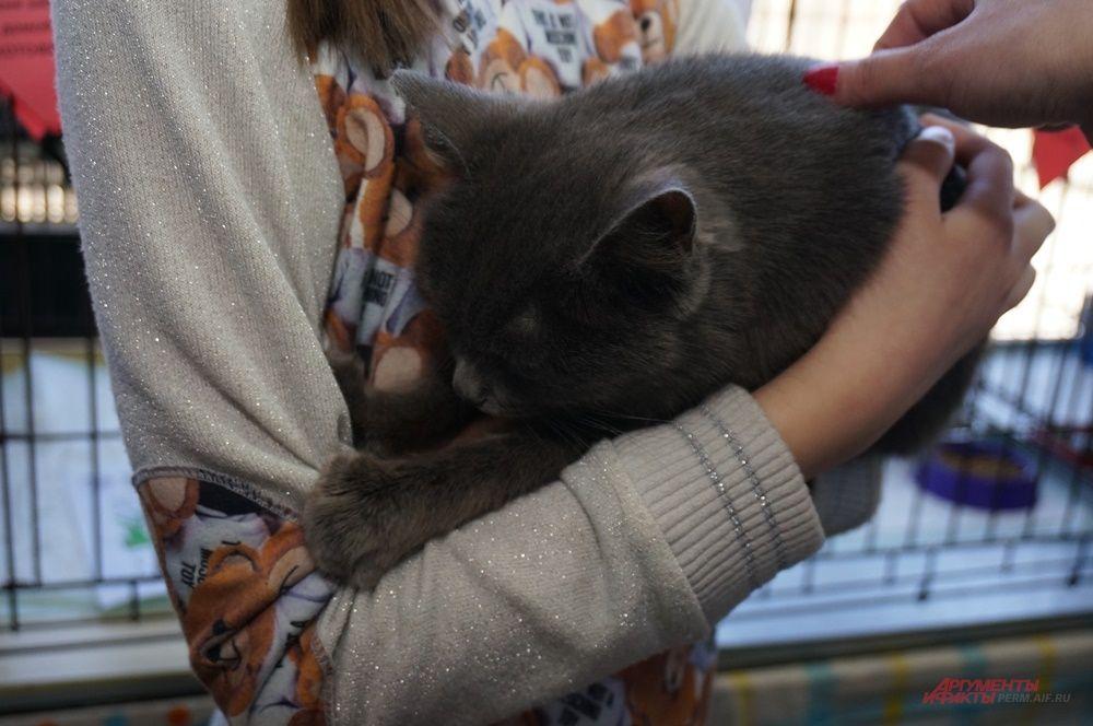 Попадая на руки посетителей, кошки начинали мило мурлыкать.