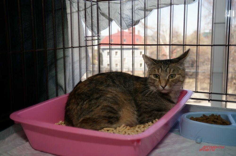 На выставке можно было увидеть котов и кошек разного возраста и разного окраса.