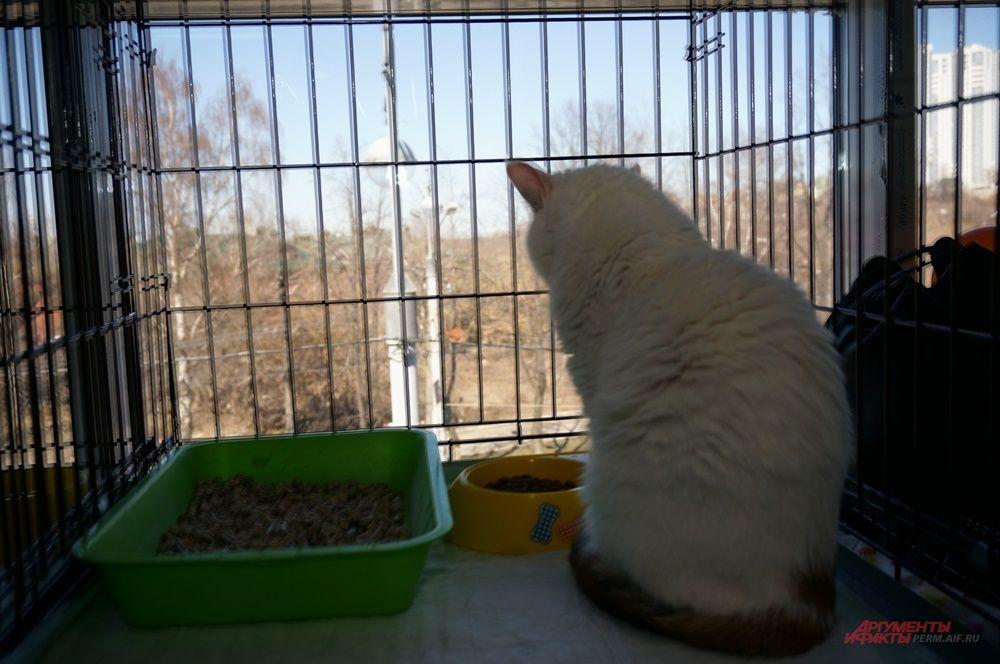 Некоторые кошки почти отчаялись в надежде обрести дом.