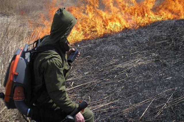В России введен полный запрет на бесконтрольное выжигание сухой травы.