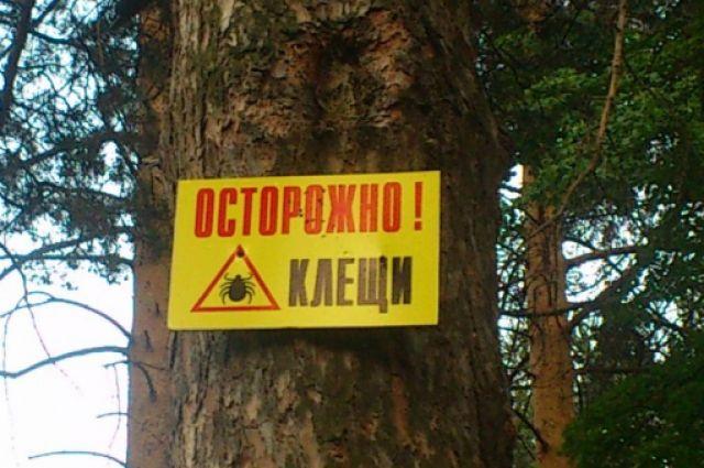 Клещ может впиться и в городе, и в лесу.