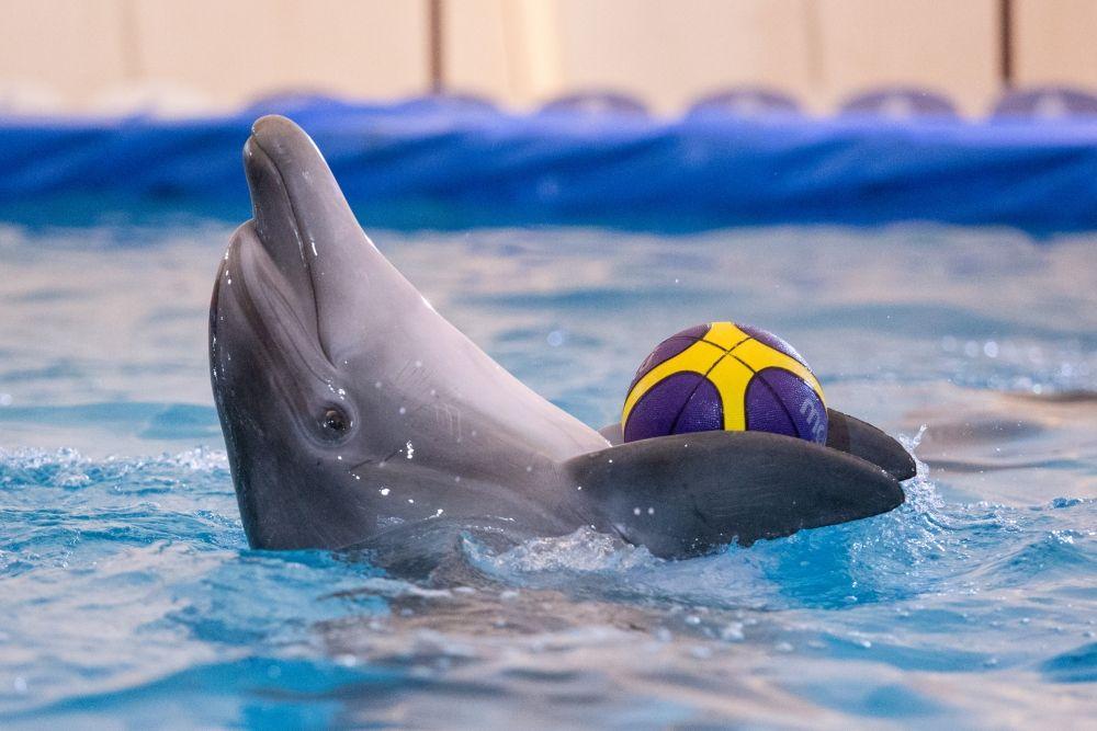 Дельфины улавливают дружелюбный настрой.