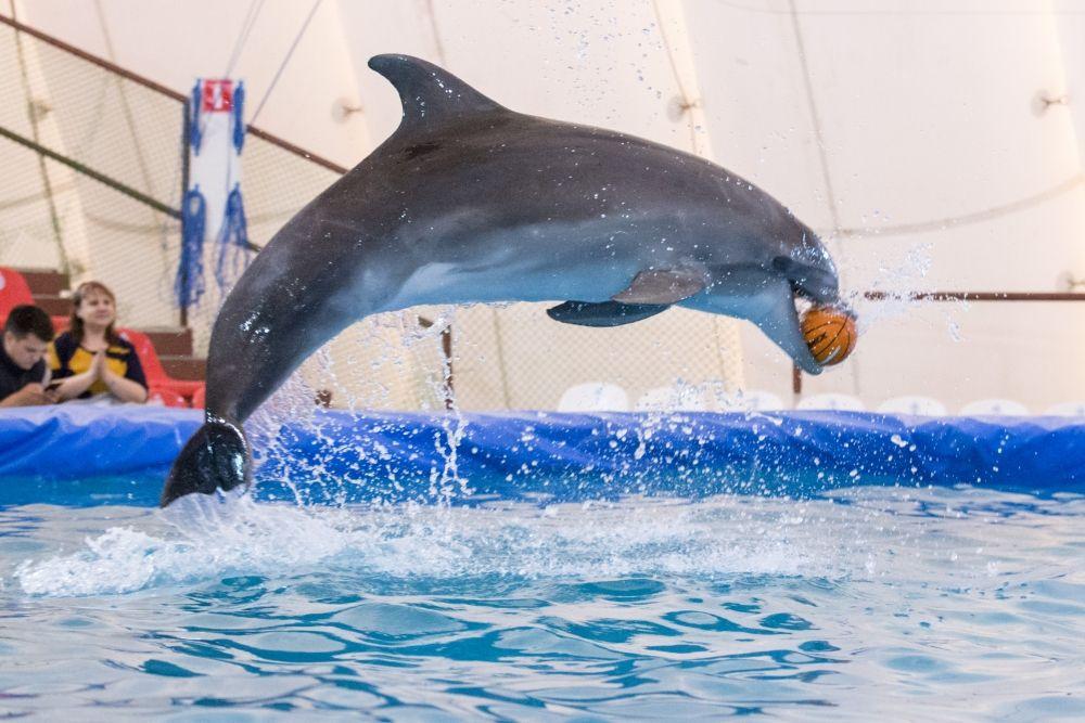 Дельфинам нравится выступать.