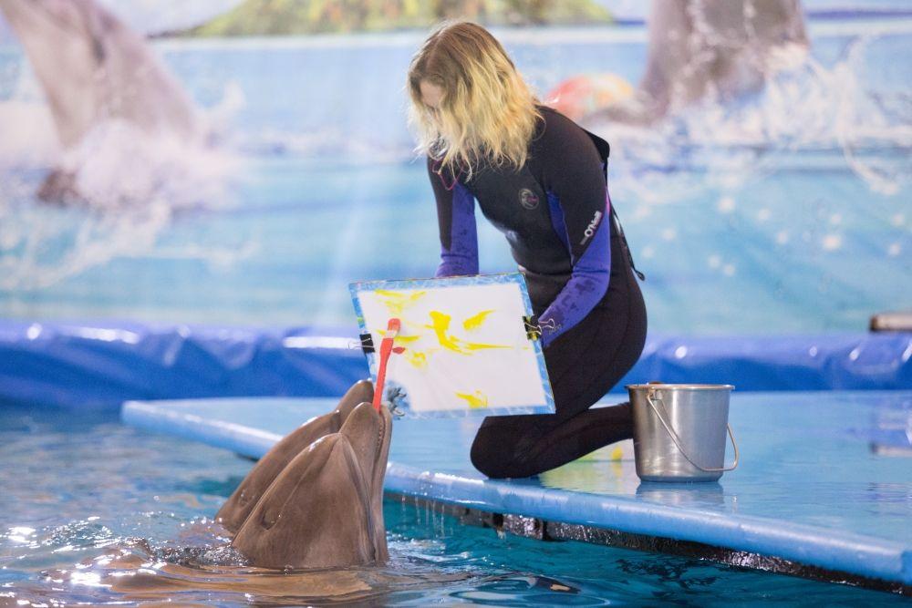 Дельфины умеют рисовать, последний снимок продали за 2000 рублей.