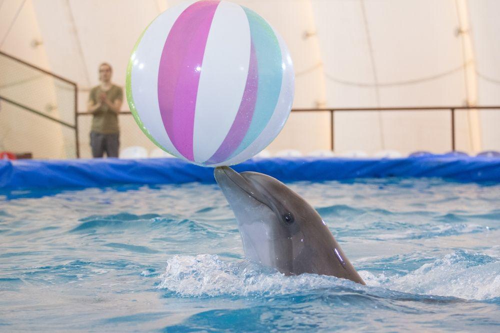 Дельфины понимают только воспитание «пряником».