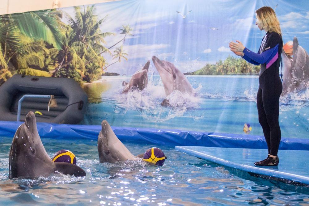 Дарья Звягинцева утверждает, что профессии тренера дельфинов не существует.