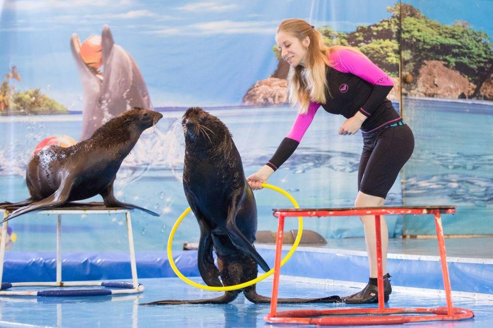 Чтобы дельфины слушались человека, нужно заслужить их абсолютное доверие.