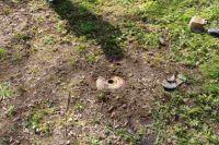 Возле детской площадки в парке Калининграда обнаружили мину. Оказалось - учебную.
