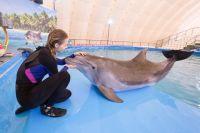 Дельфинов можно приручить только уважением и ласковым отношением.