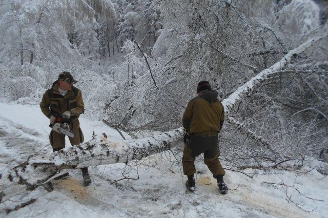 На «Столбах» майский снегопад вновь сломал деревья изавалил дорогу