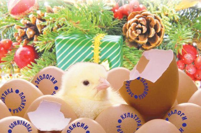 16 тысяч немецких цыплят станут «жителями» тюменской птицефабрики