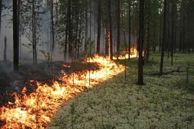 Из-за горящей травы сгорело 2 гектара леса