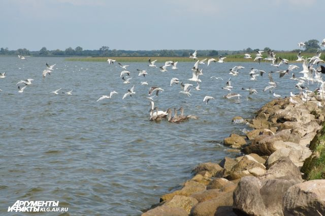 В Куршском заливе четвертый день ищут пропавших рыбаков.