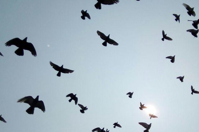 Новосибирцев научат определять виды птиц