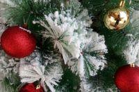 Тюменцы «отпразднуют» Новый год уже в мае