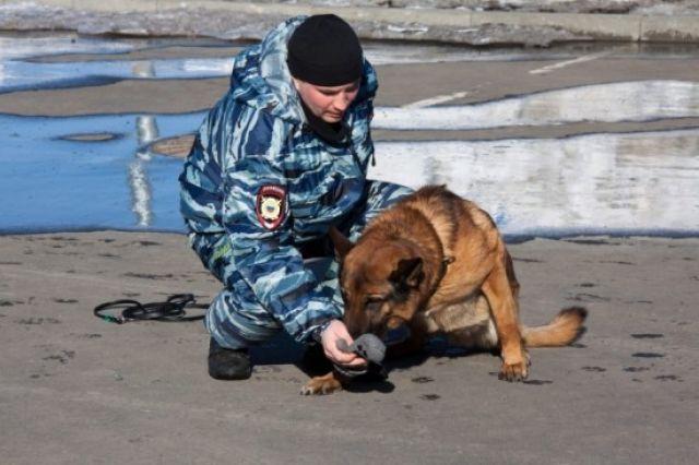 Амур неоднократно принимал участие в операциях карельского МВД. Фото с официального сайта ведомства.