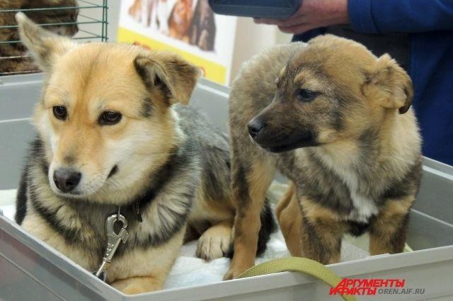 В Оренбурге все же состоится выставка-раздача животных «Подари себе друга»
