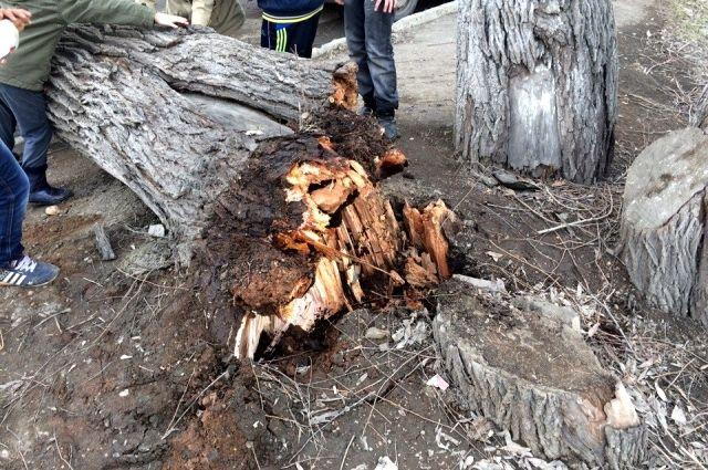 Деревья падают на проезжую часть