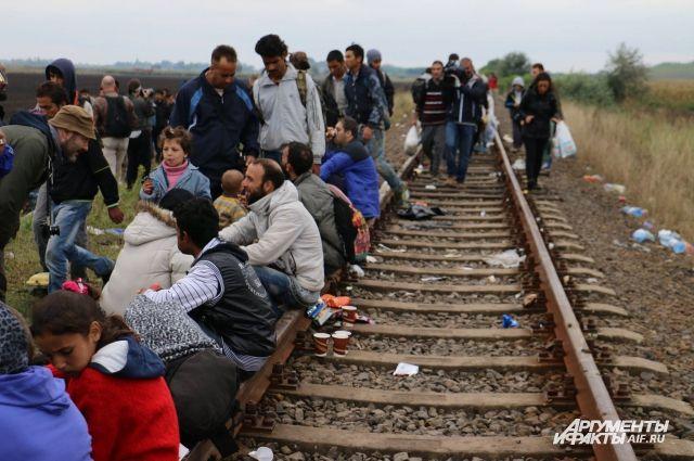46% поляков против приема беженцев измусульманских стран