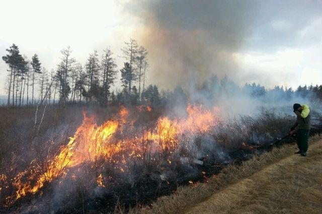 Шесть пожаров потушили влесах Приморья засутки