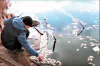 Специалисты выясняют причины массовой гибели рыбы.