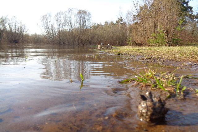 Вода вВятке вчерте Кирова поднялась на10см
