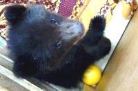 Медвежонок Маша.