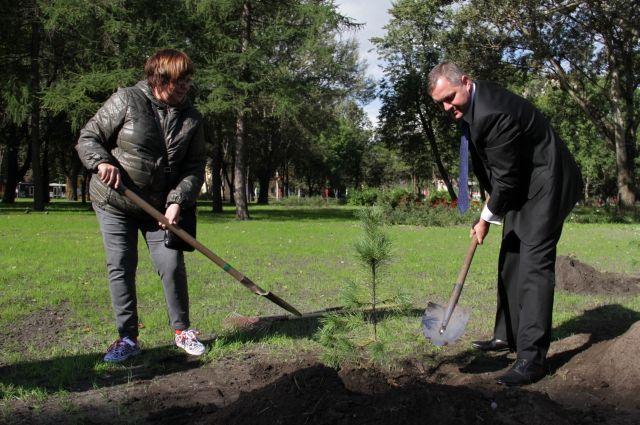 14 тыс. молодых деревьев высадят вЮгре