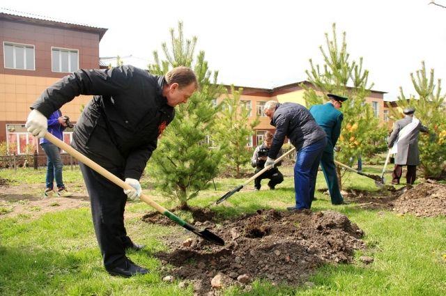 Около 200 деревьев было высажено в День Победы в рамках акции «Аллея России» в Красноярске.