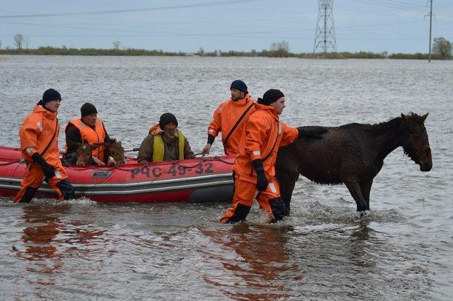 Сотрудники МЧС помогли лошадкам переплыть затопленную территорию