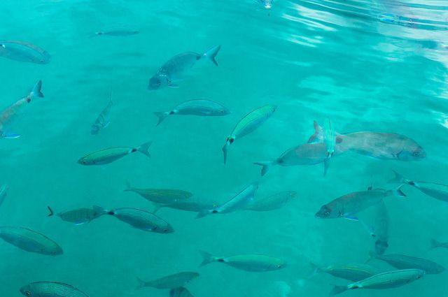 Местная рыба в основном продается на ярмарках и рынках