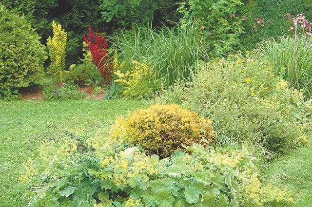 Травы весной. Когда делить и пересаживать злаки?